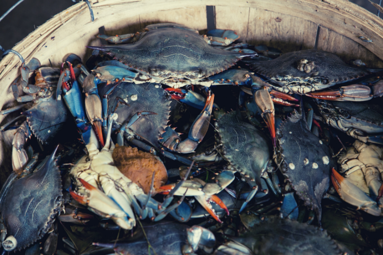 The Crabs in a Bucket Analogy Explained