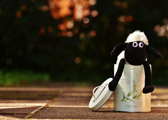 Income Sheep Poem