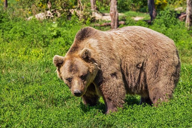 bears discovery wildlife park
