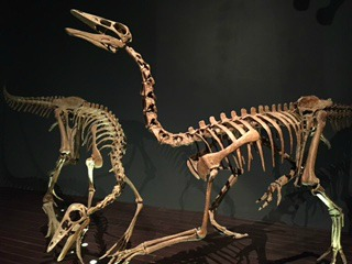 Dinosaur Structure at Royal Tyrrell Museum