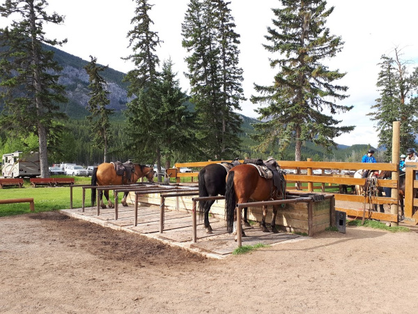 Horses Resting and Eating at Banff Trail Riders
