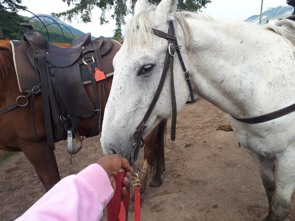 Meeting my horse