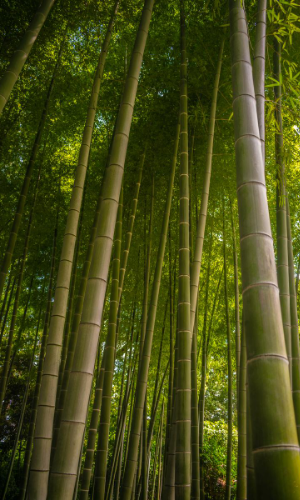 The Remarkable Growth of the Bamboo Plant - Lessons in Personal Development