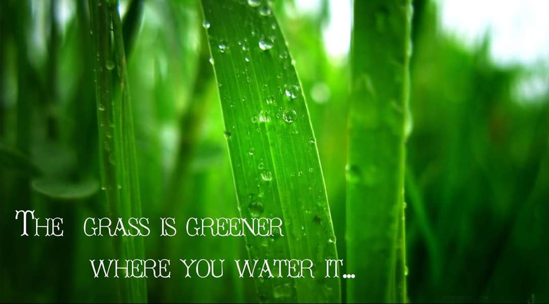 The Grass is Green Where You Water It! - Thoughts on Personal Growth