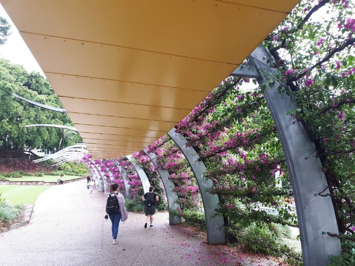 The Iconic and Grand Bougainvillea Arbour of Brisbane South Bank
